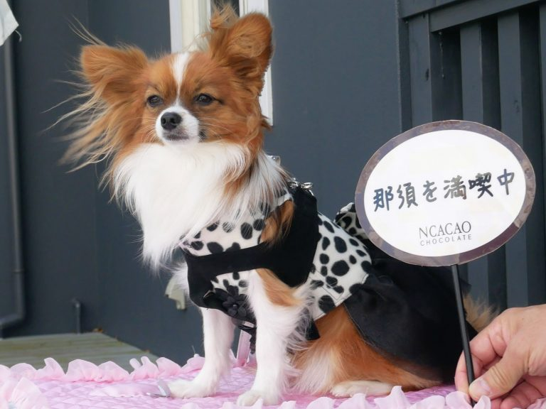 ペットフレンドリー日本一 那須で愛犬と過ごせるスポット