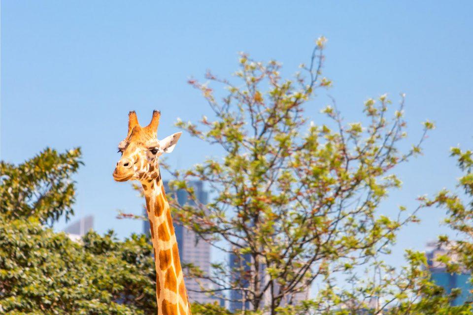 シドニー 動物園タロンガ