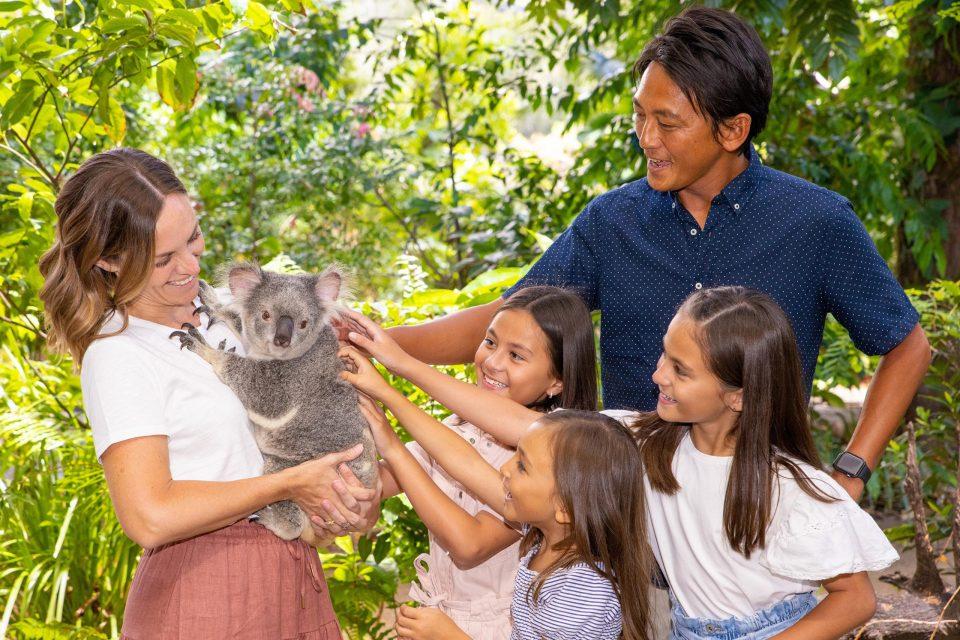オーストラリア コアラと触れ合い