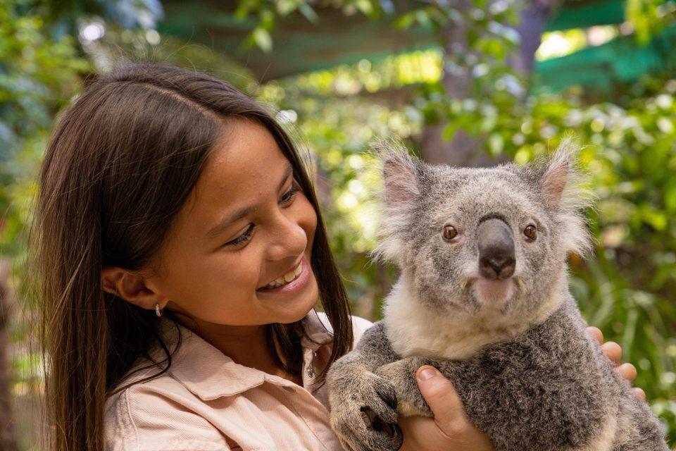 コアラを抱っこする女の子