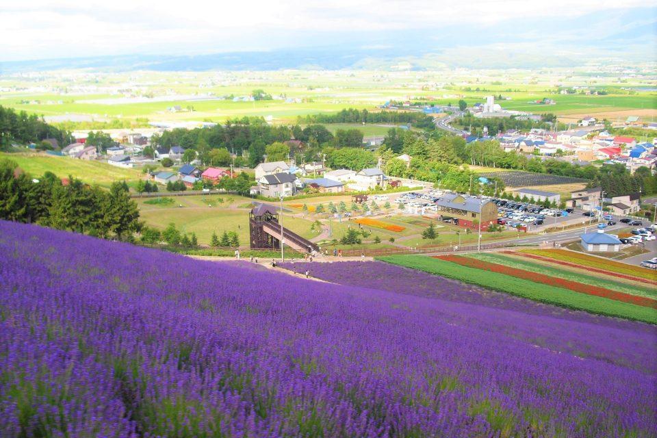 富良野線沿線のラベンダー畑