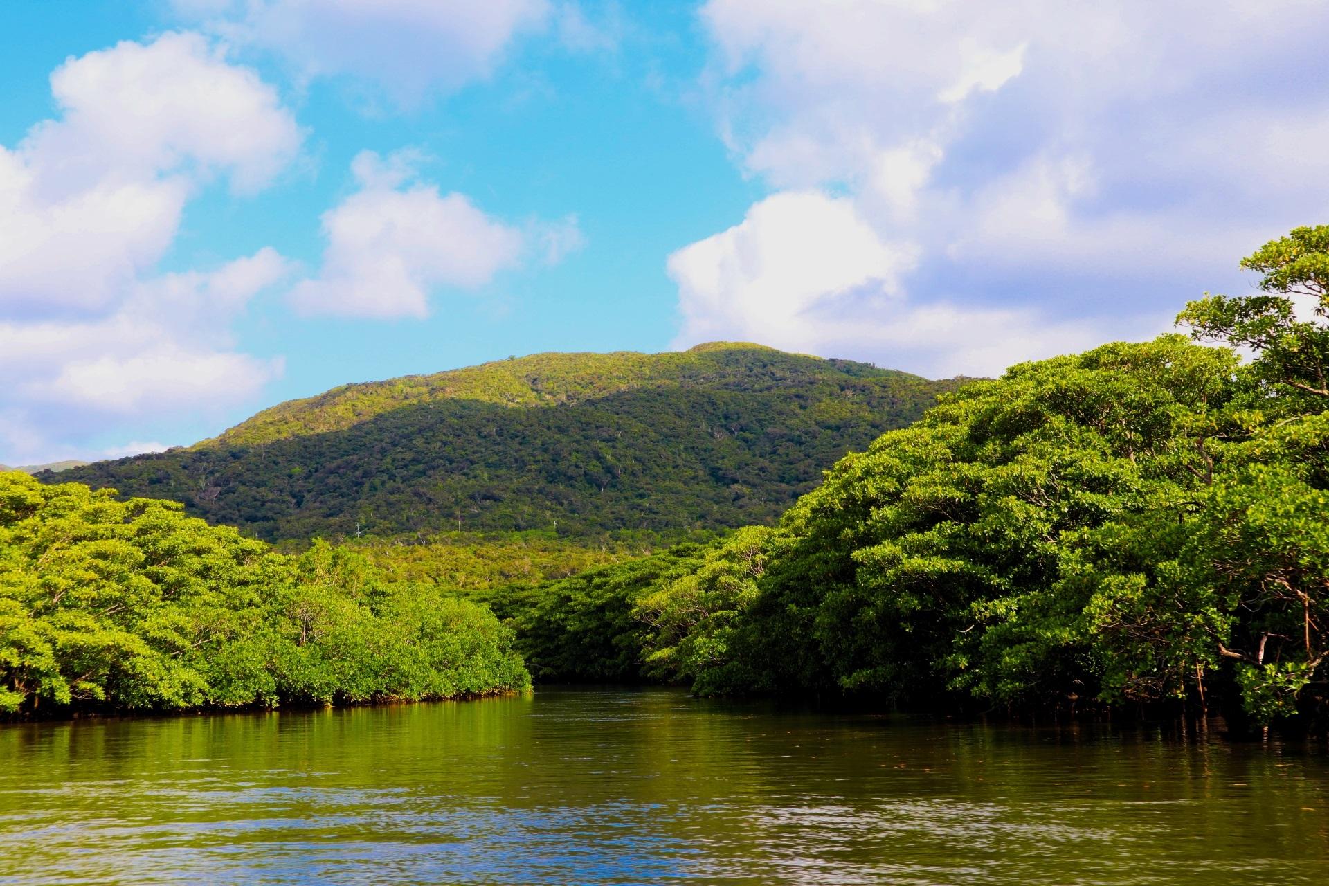 世界遺産登録日本 奄美大島徳之島沖島北部及び西表島