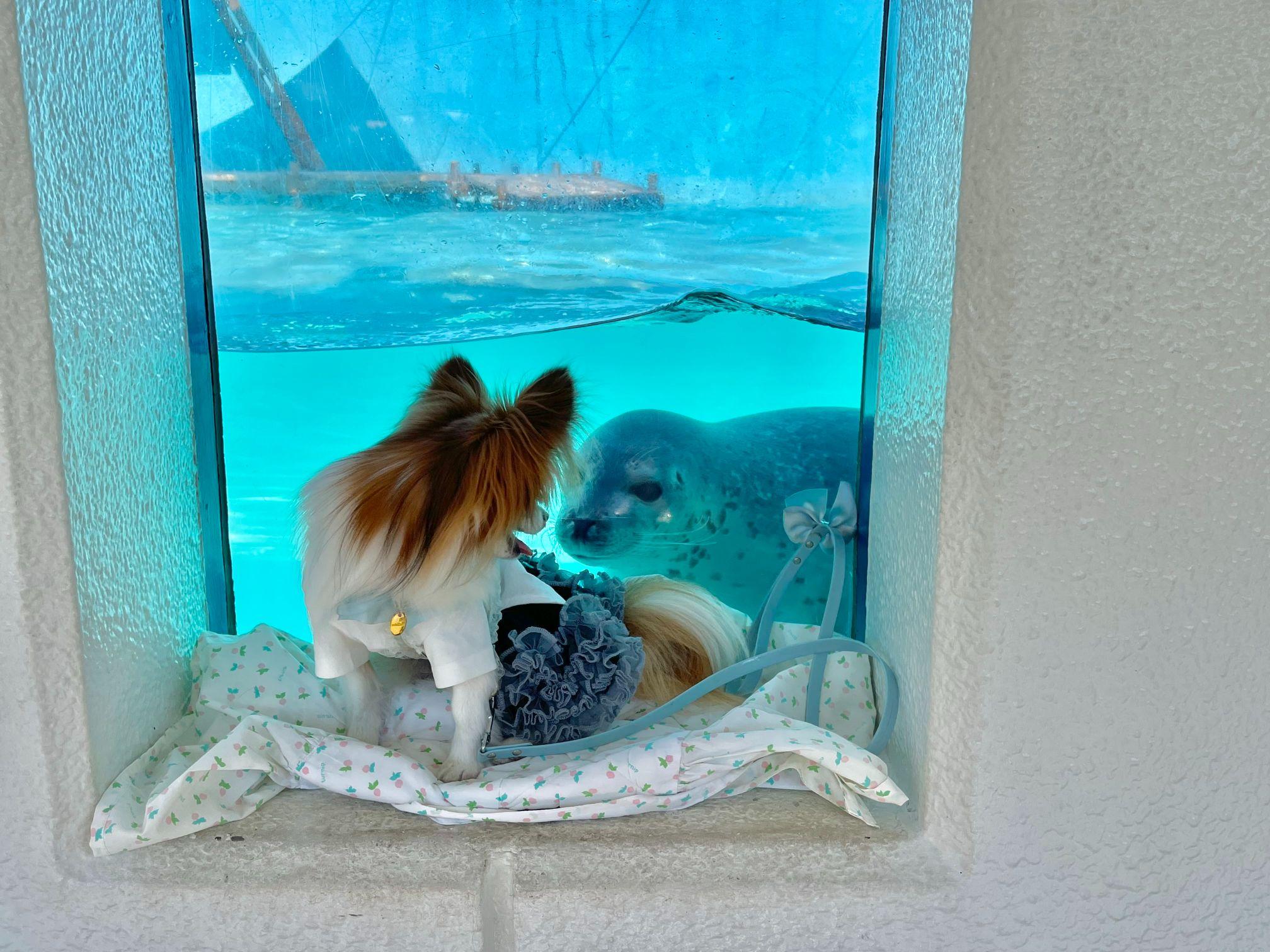 犬同伴できる水族館 油壺マリンパーク 閉館