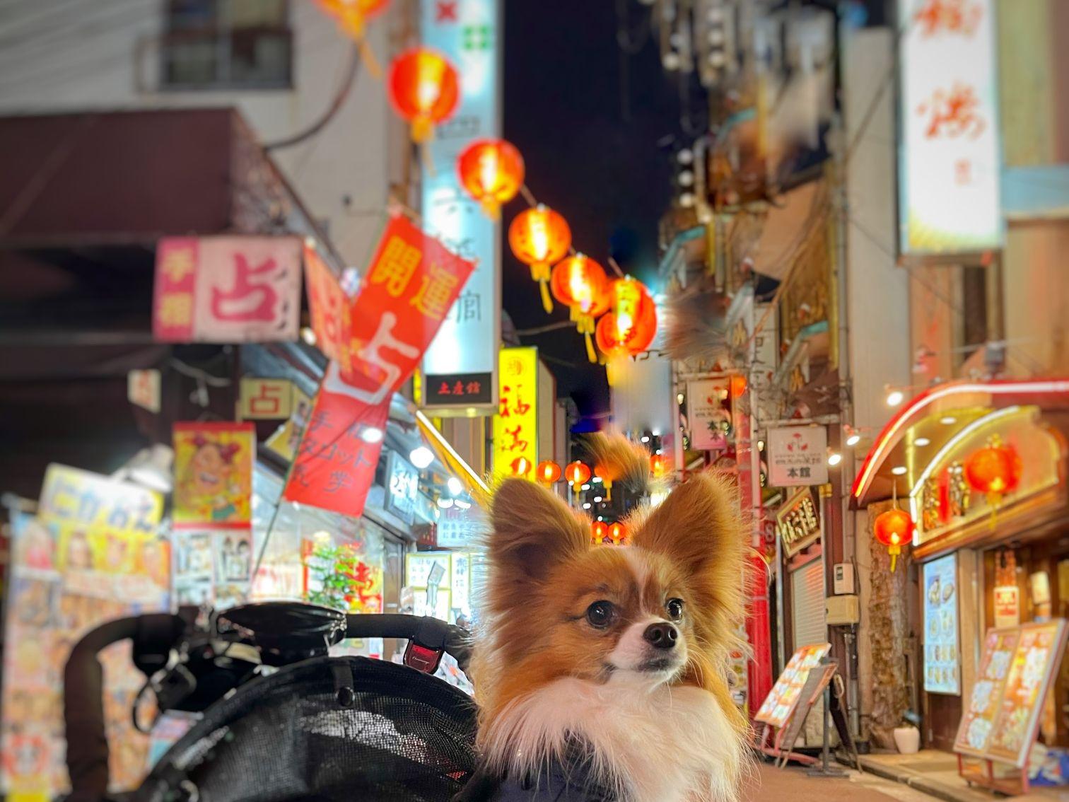 横浜中華街 食べ歩き 美味しい店