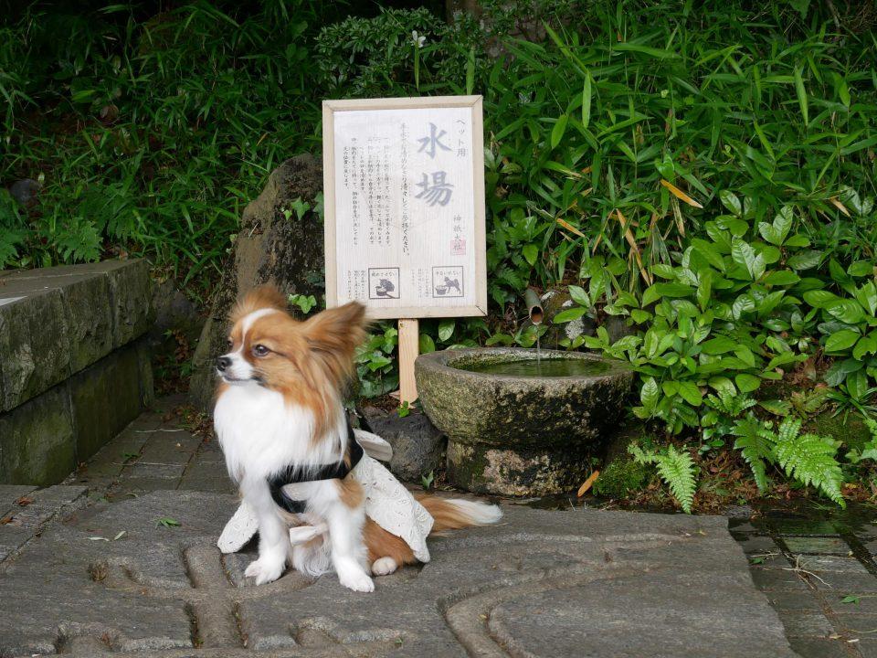 犬の神社 神祇大社