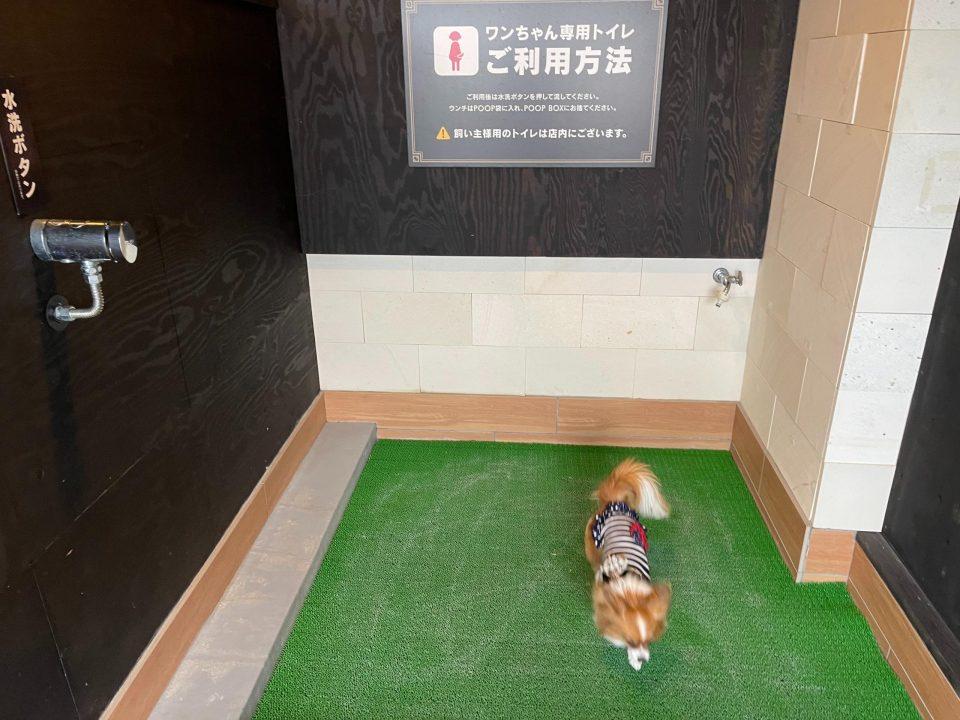 伊豆 愛犬の駅