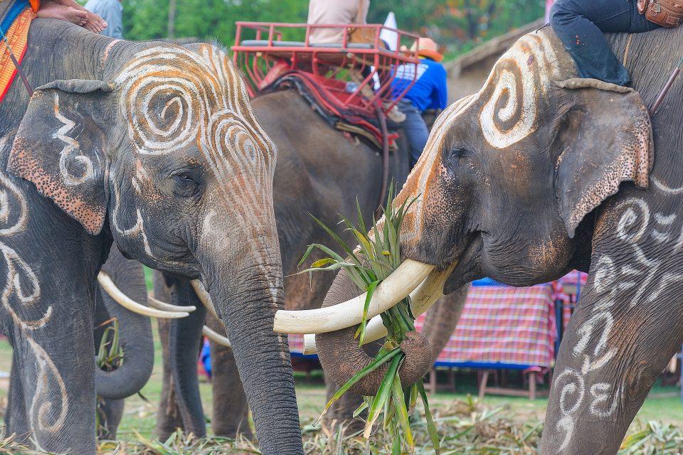 タイの祭り スリンの象まつり