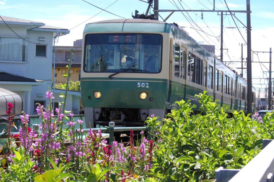江ノ電 線路際の花 石上駅付近
