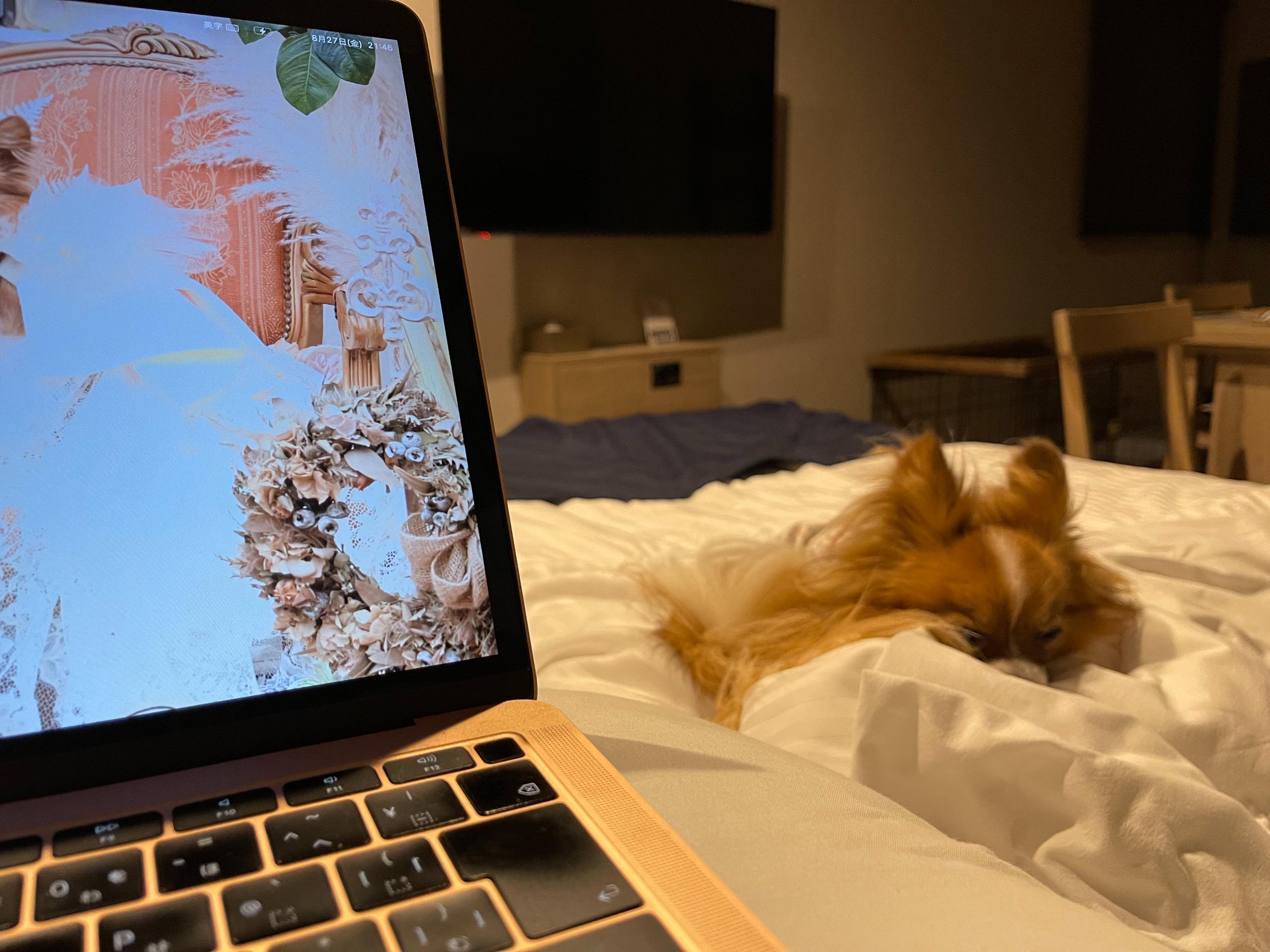 犬同伴ホテルでワーケーション
