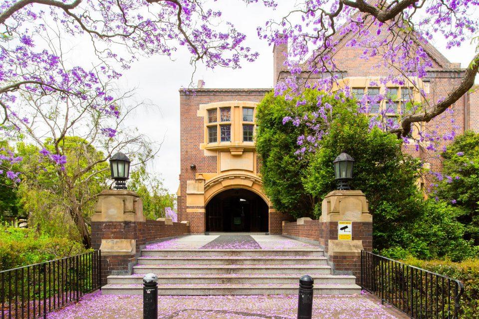 シドニー大学のジャカランダの花